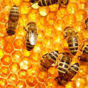 Bienenhonih